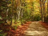autumn,sports season