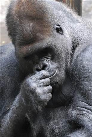 koga gorilla orders custom wall plaque